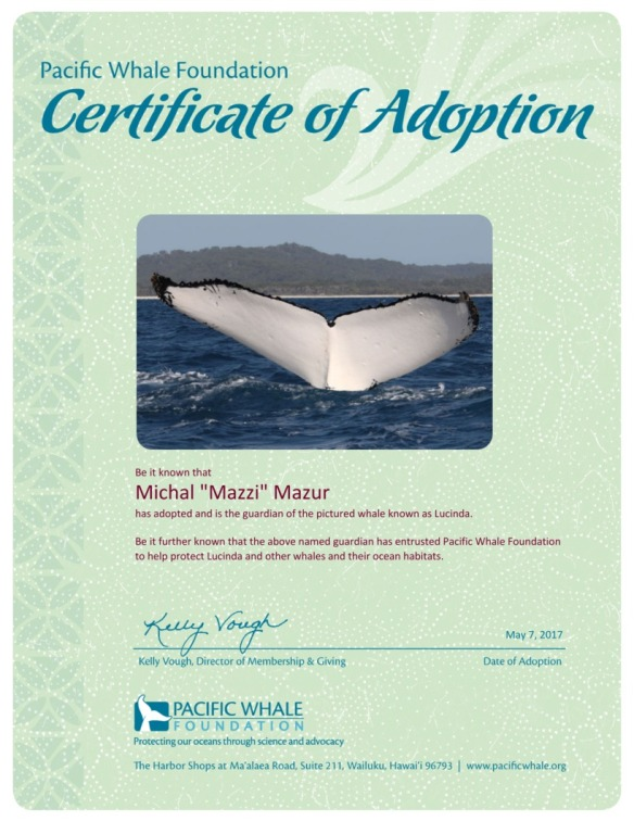 adoption-certificate-b4185195.jpg