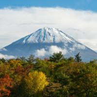 Samobójstwa w Japonii: Las Aokigahara
