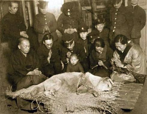 death-of-hachiko