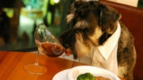 dog_restaurant