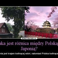Polska drugą Japonią?